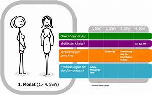 Geburtstermin Berechnen Nach Ssw : 2 schwangerschaftswoche 2 ssw empf ngnis konzeption ~ Themetempest.com Abrechnung