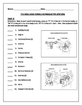 Human Growth And Development Male And Female Reproductive Systems Quiz