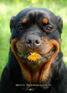 dog smiles images   cute animals