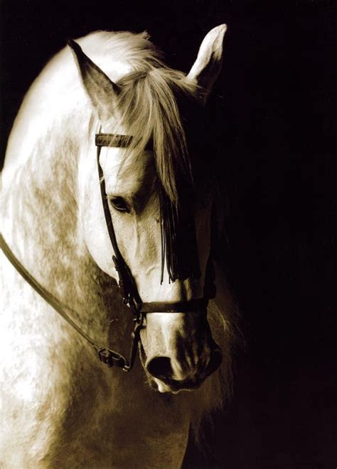 horse andalusian horses dressage
