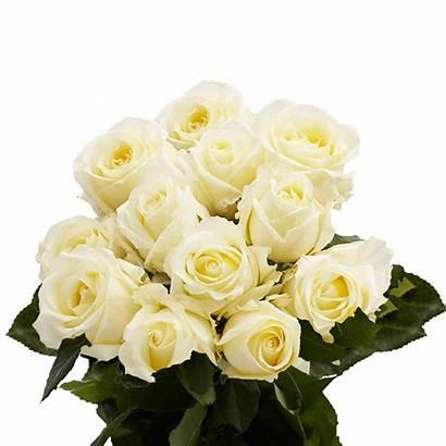 Roses Ivory Dozen Valentine Globalrose Delivery Order