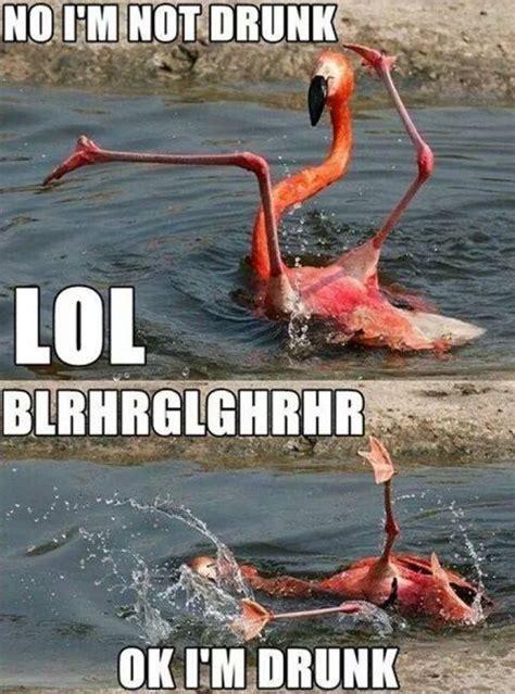 Meme Drunk - no im not drunk animal meme