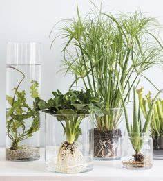 Anthurie Im Wasser : zimmerpflanzen berraschend inszeniert wintergarten aufpflanzeln pinterest wasserpflanzen ~ Yasmunasinghe.com Haus und Dekorationen