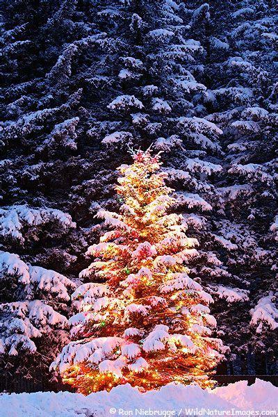 snowy alaskan cluster light tree 17 best images about seward alaska on alaska