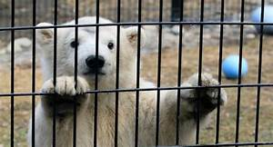 The Problem With Zoos And Accepting Our Losses - Eating ...