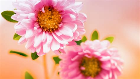 Wallpaper Of Hd Flower by Pink Floral Wallpapers Hd Wallpapers Id 11088
