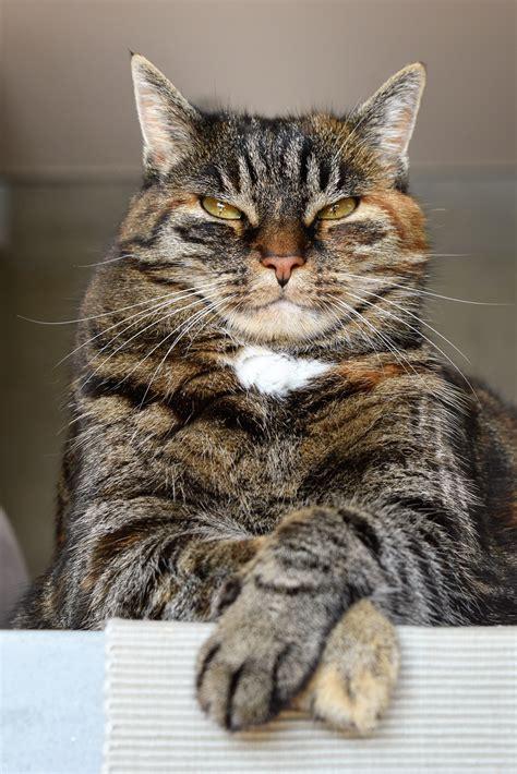 stock photo  adorable angry animal