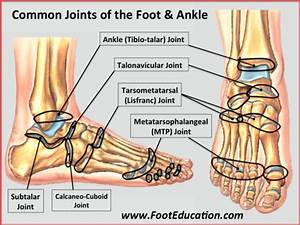 Bones And Joints Of The Foot And Ankle Overview