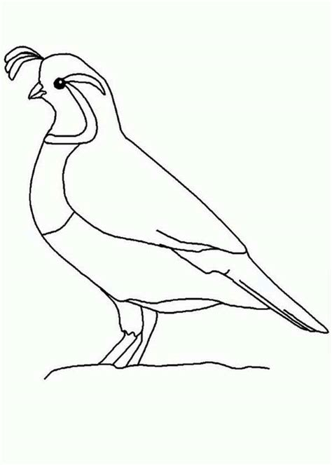 Coloring Quail by Quail Outline Coloring Page Color