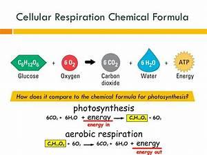 Photosynthesis Formula | Beauty Girls