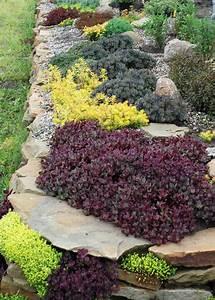Steinbeet Pflanzen Winterhart : sedum sunsparkler firecracker dazzleberry als ~ Watch28wear.com Haus und Dekorationen