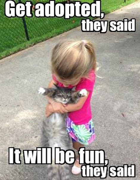 adopted   fun  funny cat memes cat