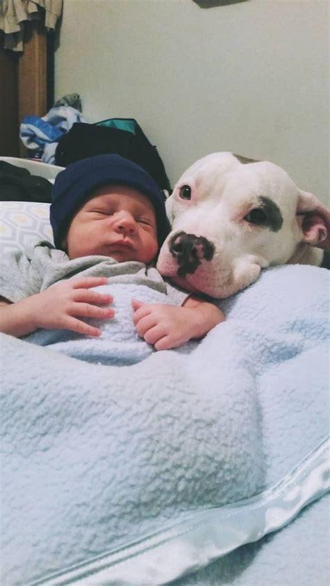 leyes  nos protegen de los pitbulls son necesarias