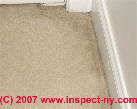 3 Ways To Remove Water Stains From Carpet Wikihow How To Clean Diarrhoea From Carpet Install A Tack Strip Cleaning Christchurch New Zealand Premier Care Washington Mo Much Charge Per Square Foot For Selections Toronto Dried Diarrhea Scotchgard Foam Pad Reviews