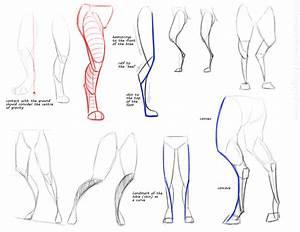 Anthro Anatomica  2014