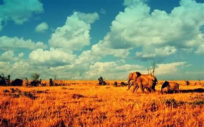 African Animals Elephants Elephant Savanna Wallpapers Savannah