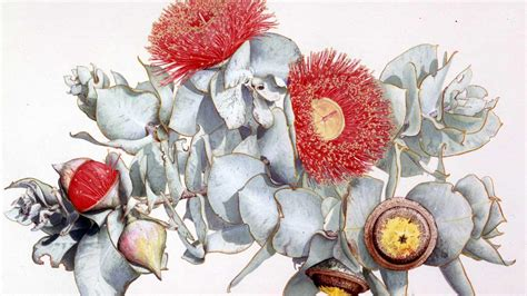 Press Release Kew's Shirley Sherwood Gallery Of Botanical