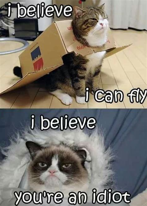 dreams crushed animals  pets funny grumpy cat memes