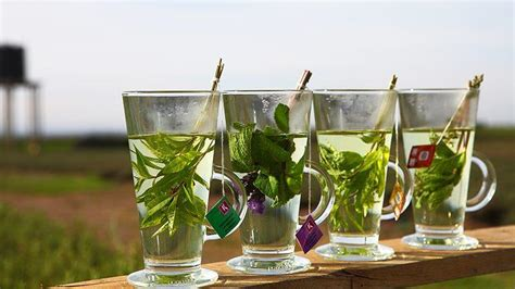 tea and infusions top 28 tea and infusions tea exceptional natfood berry infused iced green tea recipe