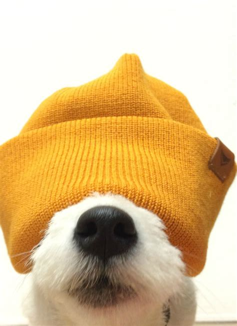 🖤 Dog With Hat Meme Fortnite 2021