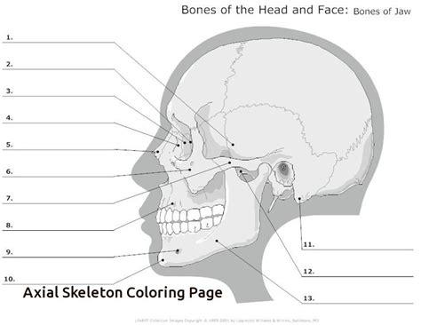 axial skeleton worksheet the best worksheets image