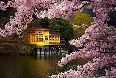 Japan Sakura Lake Flowers April Spring Wallpapers