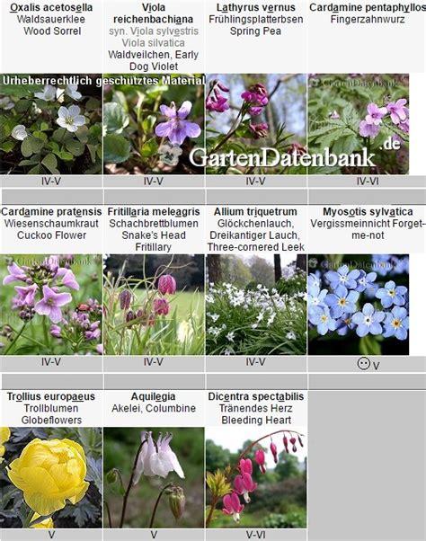 Zimmerpflanzen Datenbank Alpenveilchen by Schattenstauden Stauden F 252 R Schatten Und Nordseite