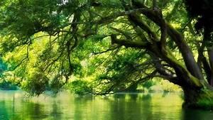 Baum Am Wasser : tree in water forest hd wallpaper hintergrund ~ A.2002-acura-tl-radio.info Haus und Dekorationen