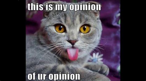 Weird Cat Meme - funny cat memes the best funny cat memes slapwank