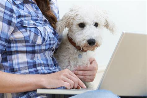 Warum Läuft Mir Mein Hund Immer Nach?  Deine Tiere