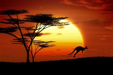 Home Kitchen Ideas - kangaroo sunset australia custom wallpaper