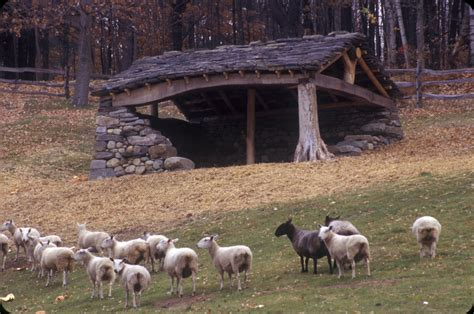 sheep shed in the company of