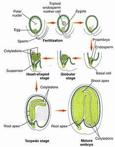 Bio 1106 Study Guide  2011-12 V  Y   Y At