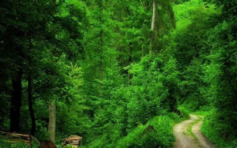 Green Forest Photo Hd by Green Forest Wallpapers Hd1 Hd Desktop Wallpapers 4k Hd