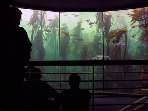 aquarium des deux oceans aquarium des deux oc 233 ans wikip 233 dia