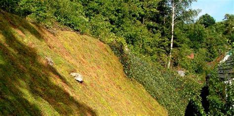 Bodendecker Am Hang by B 246 Schung Gugenhan Mit Sedum Bodendecker Sempergreen