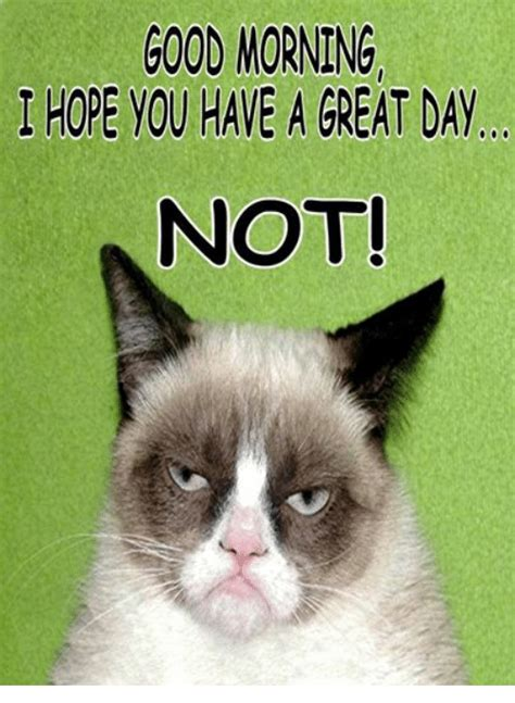 Grumpy Cat Good Morning Meme - funny good morning and grumpy cat memes of 2016 on sizzle