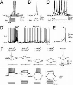 C Elegans Lineage Wiring Diagram