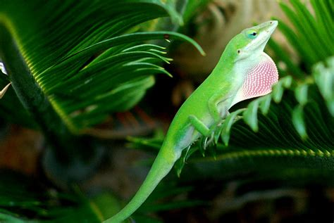 Geckos For Bugs| Off-topic Discussion Forum