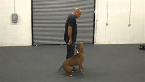 Got k9 pitbull dog training in las vegas nevada youtube for Dog training las vegas nv