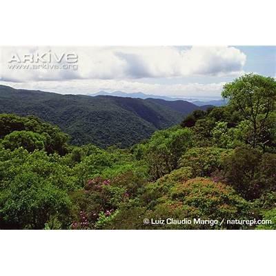 Discover BrazilArkive