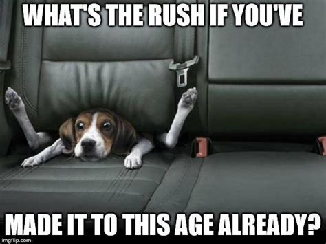 Happy Birthday Dog Meme - top 100 original and hilarious birthday memes part 2