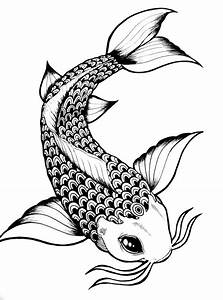 Drawn koi fish - Pencil and in color drawn koi fish