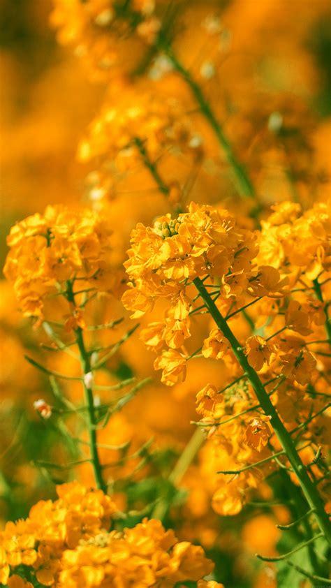 mq orange flower spring fun nature wallpaper