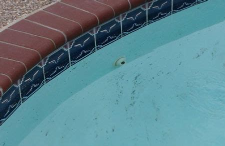 Active Network Properties Your Home, Pool Repair And