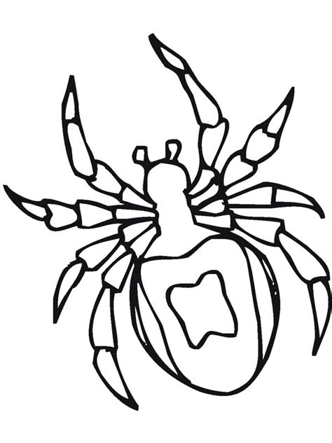 spider insect coloring page coloring sky