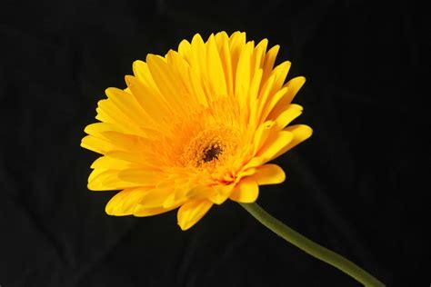 picture nature flora flower petal plant macro
