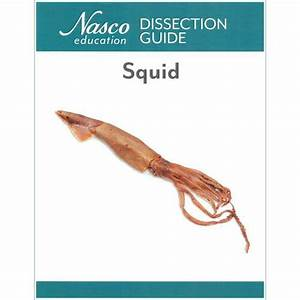 Squid Dissection Guide  How To Dissect A Squid