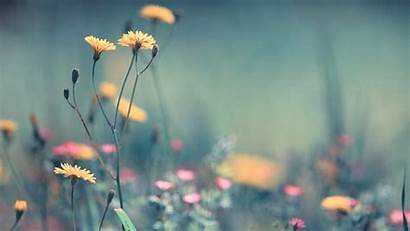 1080p Wallpapers Spring Flower Screen 4k Wide