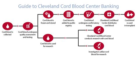 cord blood cleveland cord blood